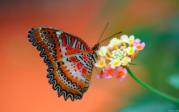 butterfly_on_flower-1920x1200