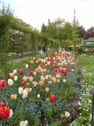 Red white & yellow tulips