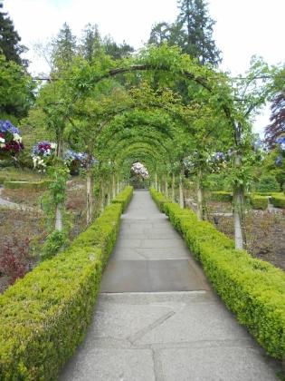 Rose(less) garden