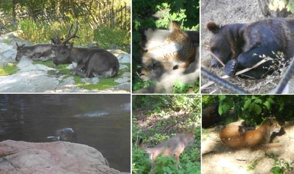 Skansen animal montage