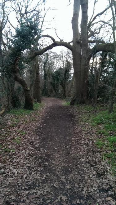 Path - Dollis Green Walk (Hendon Golf Course)