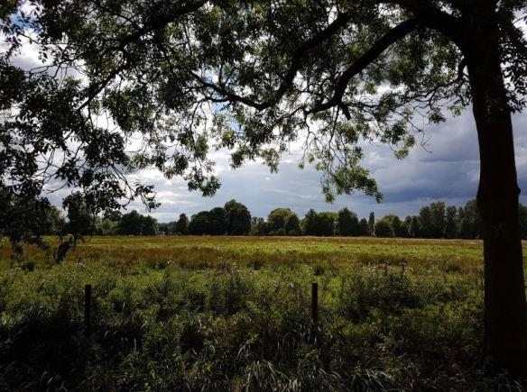 CC Meadow 1