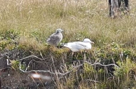 Botany Bay - Seagulls (sml)